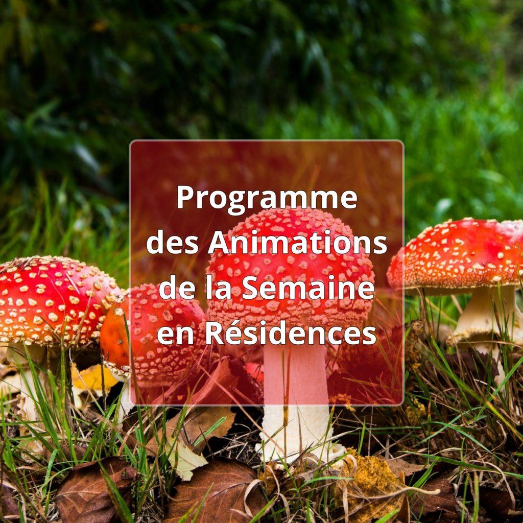Programme des animations des résidences